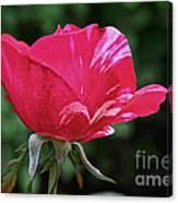 Scentimental Pink Canvas Print