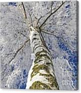 Snowworld Fineart  Canvas Print