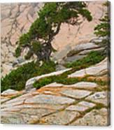 Schoodic Cliffs Canvas Print