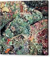 Scorpionfish Canvas Print