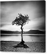Scotland Milarrochy Tree Canvas Print