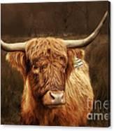 Scottish Moo Coo - Scottish Highland Cattle Canvas Print