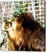 Scratching My Nose Canvas Print