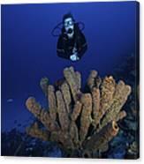 Scuba Diver Swims Underwater Amongst Canvas Print