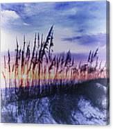 Se Oats 2 Canvas Print