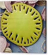 Sea Cucumber Plate Canvas Print