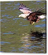 Sea Eagle's Water Landing Canvas Print