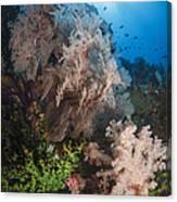 Sea Fan On Soft Coral In Raja Ampat Canvas Print
