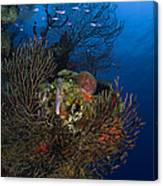 Sea Fan Seascape, Belize Canvas Print