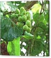Sea Grape Sgwc Canvas Print