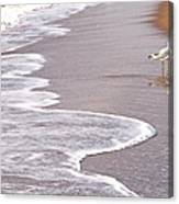 Sea Gull Reflection Canvas Print
