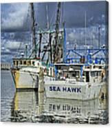 Sea Hawk Under Cover Canvas Print
