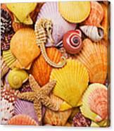 Sea Horse Starfish And Seashells  Canvas Print