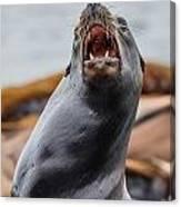 Sea Lion Agony Canvas Print