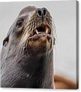Sea Lion And Yellow Fangs Canvas Print