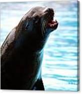Sea-lion Canvas Print