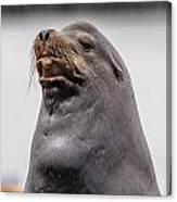 Sea Lion Satisfaction Canvas Print