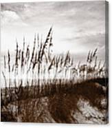 Sea Oats 1 Canvas Print