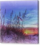 Sea Oats 5 Canvas Print