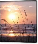 Sea Oats Beach Sunrise Canvas Print