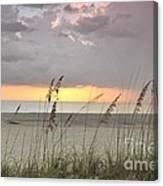 Sea Oats - Boca Grande Canvas Print