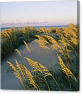 Sea Oats, Dunes, And Beach At Oregon Canvas Print