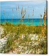 Sea Oats Gulf - Destin Canvas Print
