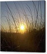 Sea Oats In The Sunset Canvas Print