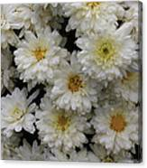 Sea Of White Flowers Canvas Print