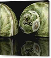 Sea Shells Photography Still Life Canvas Print