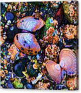 Sea Shells Sea Life Canvas Print