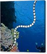 Sea Snake Canvas Print