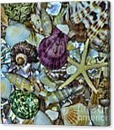 Sea Treasure - Square Format Canvas Print