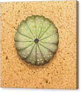 Sea Urchin Canvas Print
