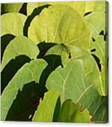 Seagrape Leaf Layer Canvas Print