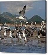 Seagul Fly By Canvas Print