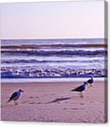 Seagull Alliance Canvas Print