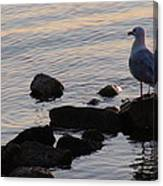 Seagull At Dusk Canvas Print