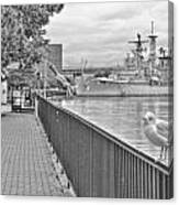 Seagull At The Naval And Military Park Canvas Print