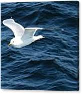 Seagull Flying Over The Waves Wc  Canvas Print
