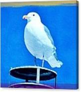 Seagull Fun Colors Canvas Print