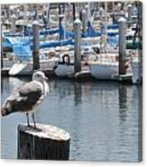 Seagull In Boatwatch Canvas Print