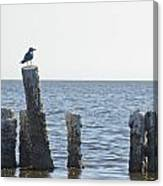 Seagull On A Post Canvas Print