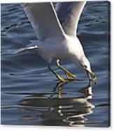 Seagull On Water Canvas Print
