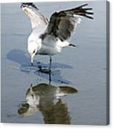 Seagull Reflection Canvas Print