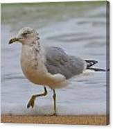 Seagull Stomp Canvas Print
