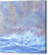 Seagulls At Play Canvas Print