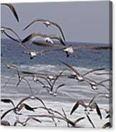 Seagulls Fly Over Surf Canvas Print