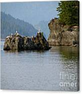 Seagulls On Rock Canvas Print