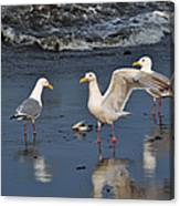 Seagulls Passion Canvas Print